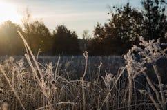 Sonnenaufgangfrostgras Lizenzfreie Stockfotos