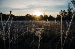 Sonnenaufgangfrostgras Lizenzfreies Stockfoto