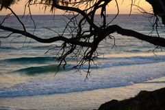 Sonnenaufgangglühen über dem Ozean mit einem tropischen Baum im Vordergrund Lizenzfreies Stockfoto