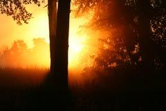 Sonnenaufgangimpuls stockbilder