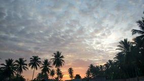 Sonnenaufgangkokosnuß lizenzfreie stockbilder