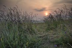 Sonnenaufganglandschaft im Sommer, der durch wilde Disteln und GR schaut Lizenzfreie Stockbilder