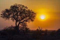 Sonnenaufganglandschaft in Nationalpark Kruger lizenzfreie stockfotografie