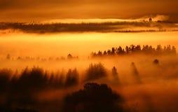 Sonnenaufgangnebel stockfoto