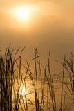 Sonnenaufgangnebel auf dem Fluss gemalt im Sepia Lizenzfreie Stockfotografie