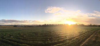 Sonnenaufgangpanorama am Ackerland Stockfoto
