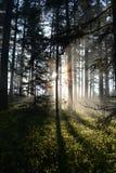 Sonnenaufgangruhm Stockbild