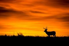 Sonnenaufgangschattenbild Lizenzfreie Stockfotos