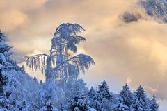 Sonnenaufgangschneewipfel stockbild
