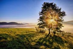 Sonnenaufgangstrahlen durch den nebeligen Baum Lizenzfreie Stockbilder