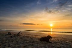 Sonnenaufgangstrand chumporn Thailand Stockfotografie