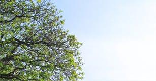 Sonnenbeschiene Blätter mit Leerstelle lizenzfreie stockfotografie