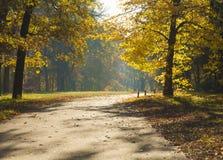 Sonnenbeschiene Parkstraße des Herbstes Stockfotografie