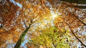 Sonnenbeschiene Treetops und fallender Herbstlaub stock video footage