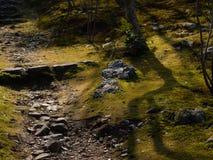 Sonnenbeschiener Moosgarten lizenzfreie stockfotos
