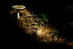 Sonnenbeschiener Pilz und Blätter Stockfotografie