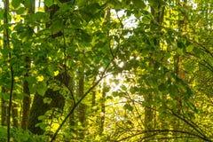Sonnenbeschiener Wald Lizenzfreies Stockbild