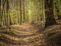 Sonnenbeschiener Weg durch Frühlings-Wald Lizenzfreies Stockfoto