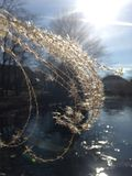 Sonnenbeschienes Gras über einem Teich Stockfotos