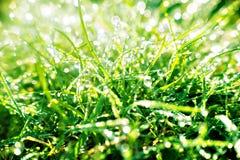 Sonnenbeschienes Gras, das mit Morgentau funkelt Stockfotografie