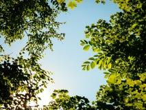 Sonnenbeschienes Laub Stockbild