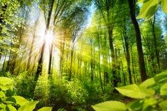 Sonnenbeschienes Laub im Wald Stockbild