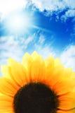 Sonnenblume über blauem Himmel Stockbilder