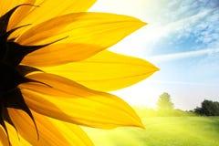 Sonnenblume über Landschaft Stockfotos