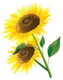 Sonnenblume lizenzfreie abbildung