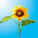 Sonnenblume stock abbildung