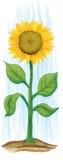 Sonnenblume Lizenzfreies Stockbild