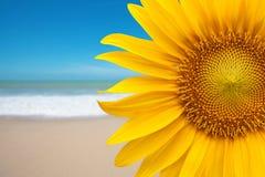 Sonnenblume auf dem Strand stockbild