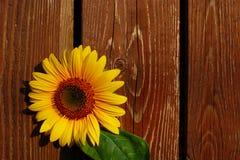 Sonnenblume auf hölzernem Hintergrund Lizenzfreie Stockfotografie