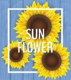 Sonnenblume auf Purpleheart Lizenzfreie Stockfotografie