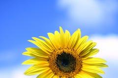 Sonnenblume in den Wolken Stockfotos
