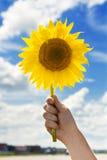Sonnenblume in der Hand Lizenzfreie Stockfotografie