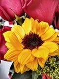 Sonnenblume des Äquators lizenzfreie stockfotografie
