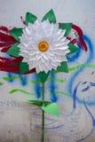 Sonnenblume, die auf den weißen und Grünbüchern macht Stockfotos