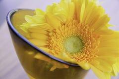 Sonnenblume für den Hauptdekor Stockbilder
