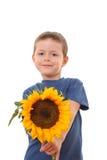 Sonnenblume für Sie stockfoto