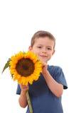 Sonnenblume für Sie lizenzfreies stockfoto