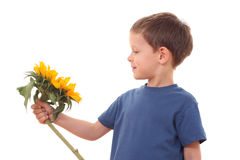 Sonnenblume für Sie lizenzfreie stockfotografie