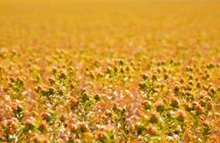 Sonnenblume-Feld Lizenzfreies Stockbild