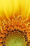 Sonnenblume flammt Sonderkommando Lizenzfreie Stockbilder