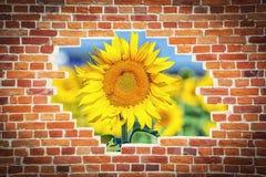 Sonnenblume gegen eine bricky alte Wand lizenzfreie stockfotos
