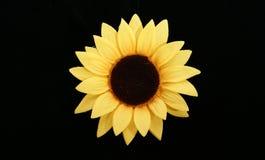 Sonnenblume getrennt auf einem schwarzen Hintergrund Lizenzfreie Stockfotografie