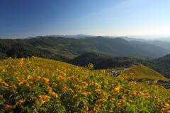 Sonnenblume-Hügel, Thailand Stockbild