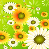Sonnenblume-Hintergrund Lizenzfreie Stockfotos