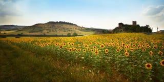 Sonnenblume II Stockfoto