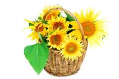 Sonnenblume im Korb Stockfoto